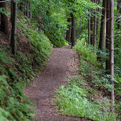 Clean trail